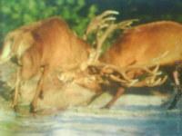Levočské Zvieratá