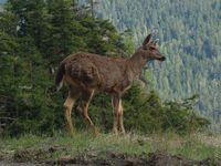 Národní parky SZ USA