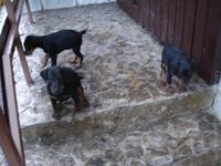 Ulla a šteniatka