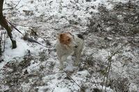 Poľovnícke psy
