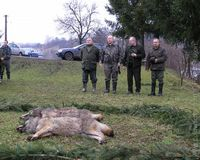 polovačka na vlkov