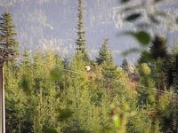 Fauna našich hôr