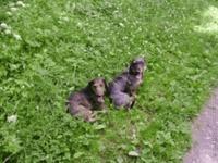 Moji psi