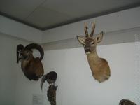 Chovateľská Výstava